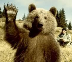 Rencontrer un ours