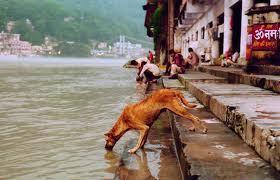 Inde : les chiens errants policiers ?