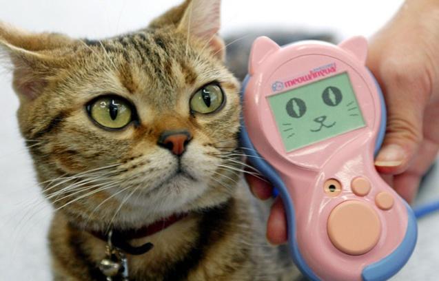 Avec Meowlingual, on ne donne plus sa langue au chat