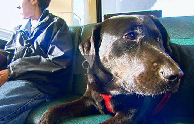 Le chien Eclipse à Seattle