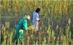 Encourager la petite agriculture