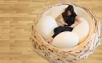 Le nap dans un nest