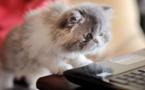 Animal de bureau